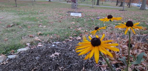Missouri Prairie Foundation Promotes Native Plants